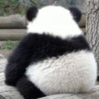 忧伤熊猫_