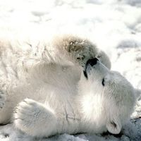 千年大熊猫