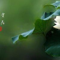 小yingying
