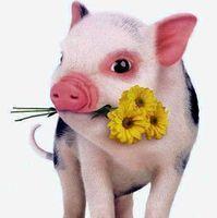 瘦瘦是个猪