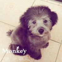 MonkeyMam