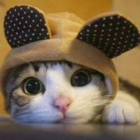 锋芒毕露的猫