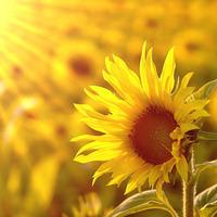 向阳向暖心