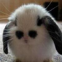 少年 小猫