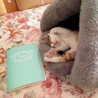 猫小美设计