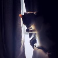 Sharyn_MiAo