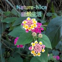 NatureNice自然设计