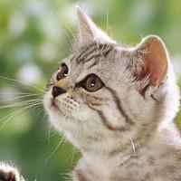 猫咪戏耍的庭院