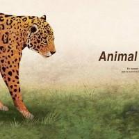 飞奔的小豹子