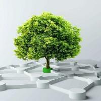独木成林设计