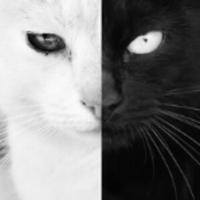 黑猫白猫工作室