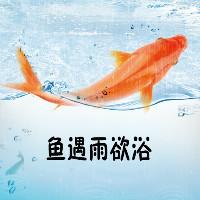 鱼遇雨欲浴