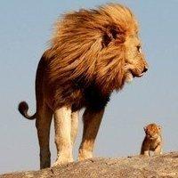 狮子王咚咚