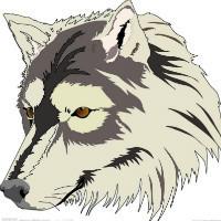 野 狼 团 队