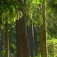 木林森装饰