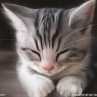 爱幻想的猫,