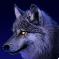 灰狼程序设计