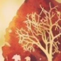 橘子树的冬天