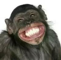猴子admin