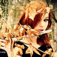 小枫的秋天