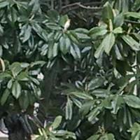 SUNJ8060