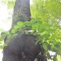 小树3357