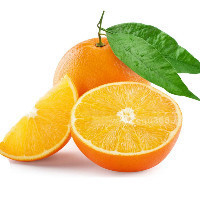 橘子汁与枝