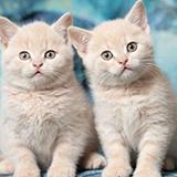 张丹丹480