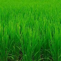 绿色工业设计