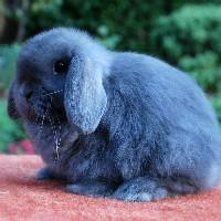 兔子爱做白日梦