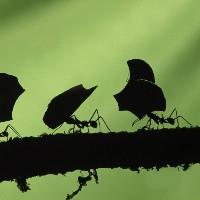 蚂蚁UI设计