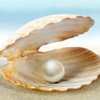 seashellonline