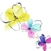 Lily艺术设计
