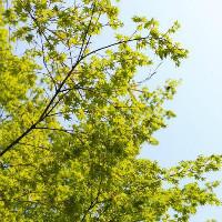 【春之树】网站建设