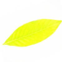 金色的叶子10