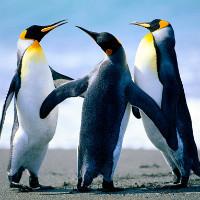嵌入式linux c