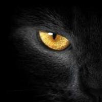 被圈养的黑猫
