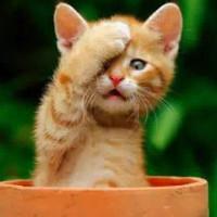 幸福的小懒猫