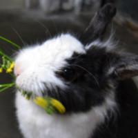 bunny是个好名字