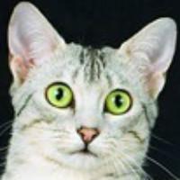 精英猫web前端开发