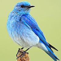 自由鸟设计