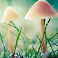 哈喽小蘑菇