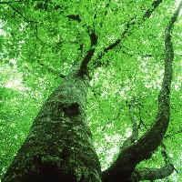 菩提树下坐千年