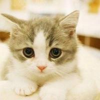 ivan猫