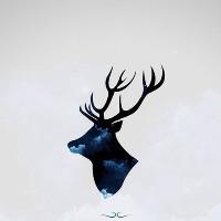麋鹿你在森林乱跑吗