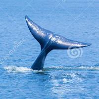 海的尾巴9527