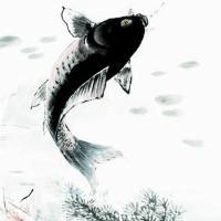瘦鱼效果图