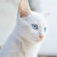 白猫软件工作室