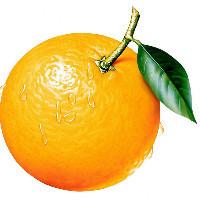 OrangeMo