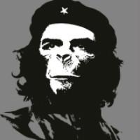 Delphi程序猿